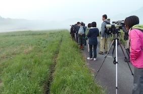 草原性の小鳥を観察.jpg